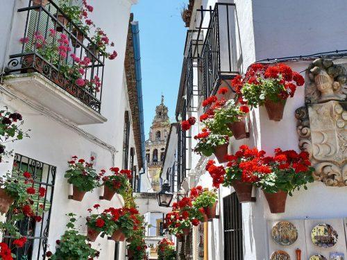 Un evento Patrimonio dell'Umanità: la Fiesta de los patios de Córdoba